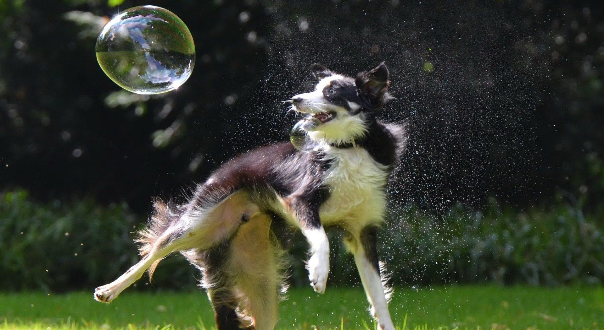 Pet Rent & Tenant Pet Policies